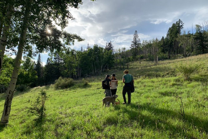 Flagstaff food foraging with optimism
